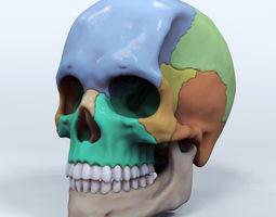 Artist Sculpted Skull Reference 3D Model