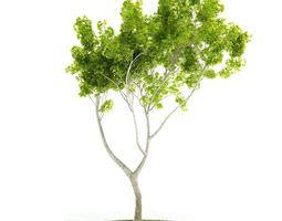 Green Plant Tree 3D model