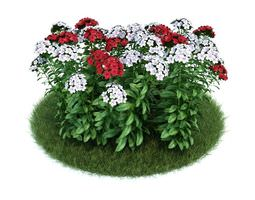 3D White And Red Flowers