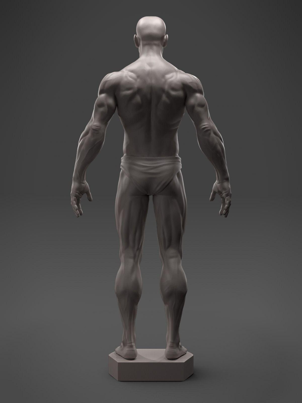 3D print model Male Anatomy Sculpture | CGTrader