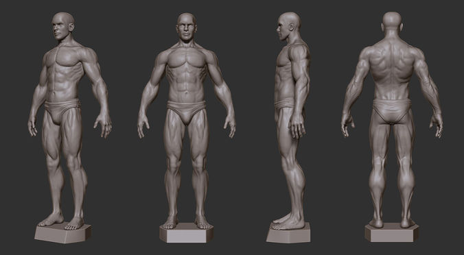 3d print model male anatomy sculpture | cgtrader, Human Body