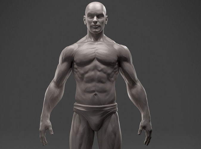 3D print model Male Anatomy Sculpture | CGTrader