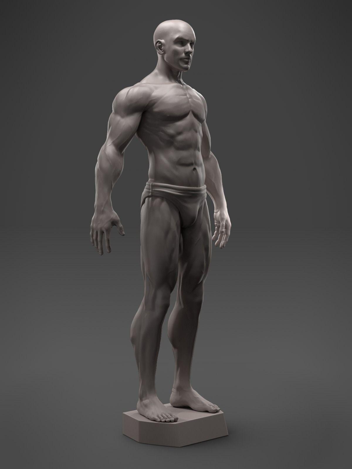 3D print model Male Anatomy Sculpture   CGTrader