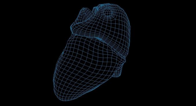 animated realistic human heart - medically accurate 3d model low-poly animated obj 3ds fbx c4d dxf stl 67