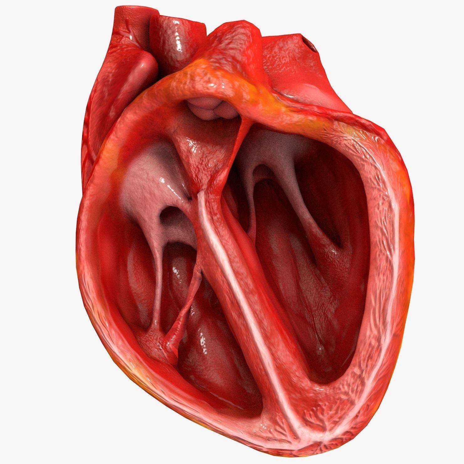 Animated human heart - photo#46