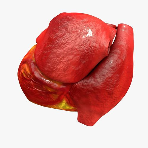 animated realistic human heart - medically accurate 3d model low-poly animated obj 3ds fbx c4d dxf stl 28