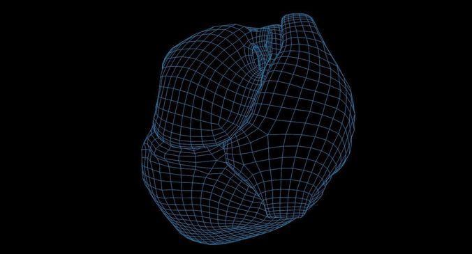 animated realistic human heart - medically accurate 3d model low-poly animated obj 3ds fbx c4d dxf stl 68