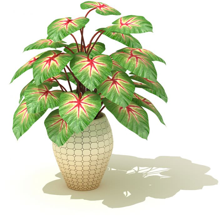 3D model Large Potted Indoor Plant | CGTrader