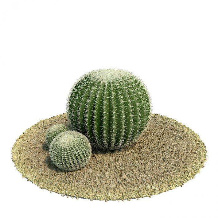 three green desert round cactus 3d model cgtrader