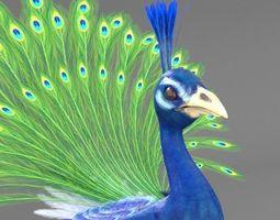 Peacock 3d Models Cgtrader