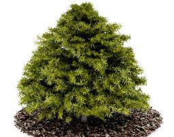Small Green Conifer Tree 3D model