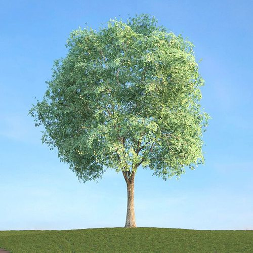tall tree 3d model obj mtl 1