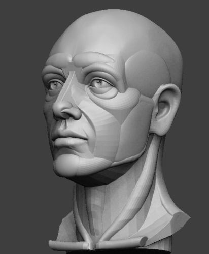 planar simplified male head  3d model obj mtl stl ztl 1