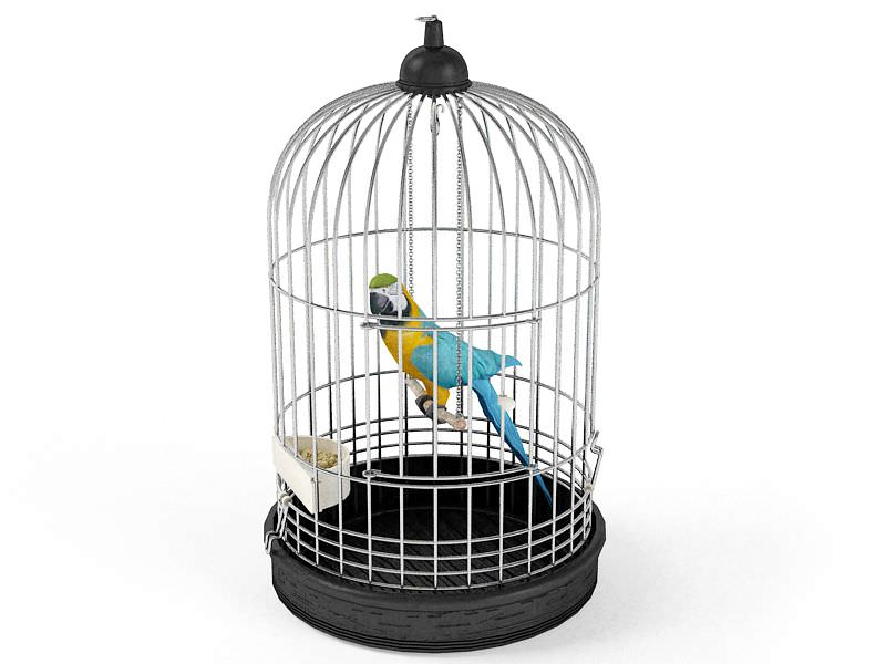Parrot bird in a cage 3d model cgtrader com