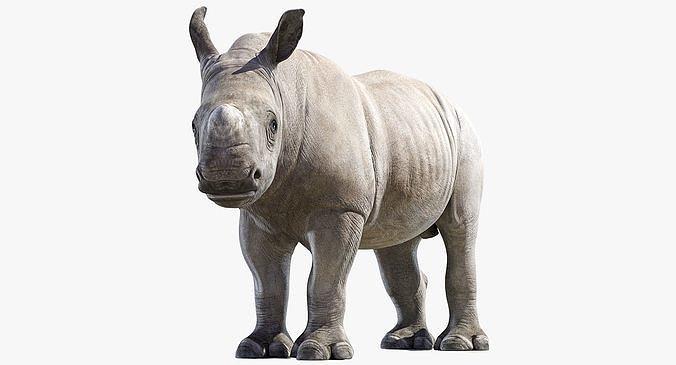 Rhino Baby Rigged