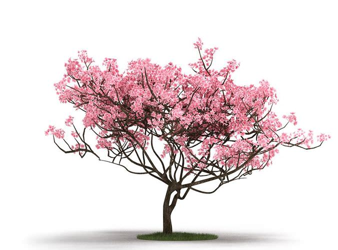 Pink tree on grass 3d model cgtrader com