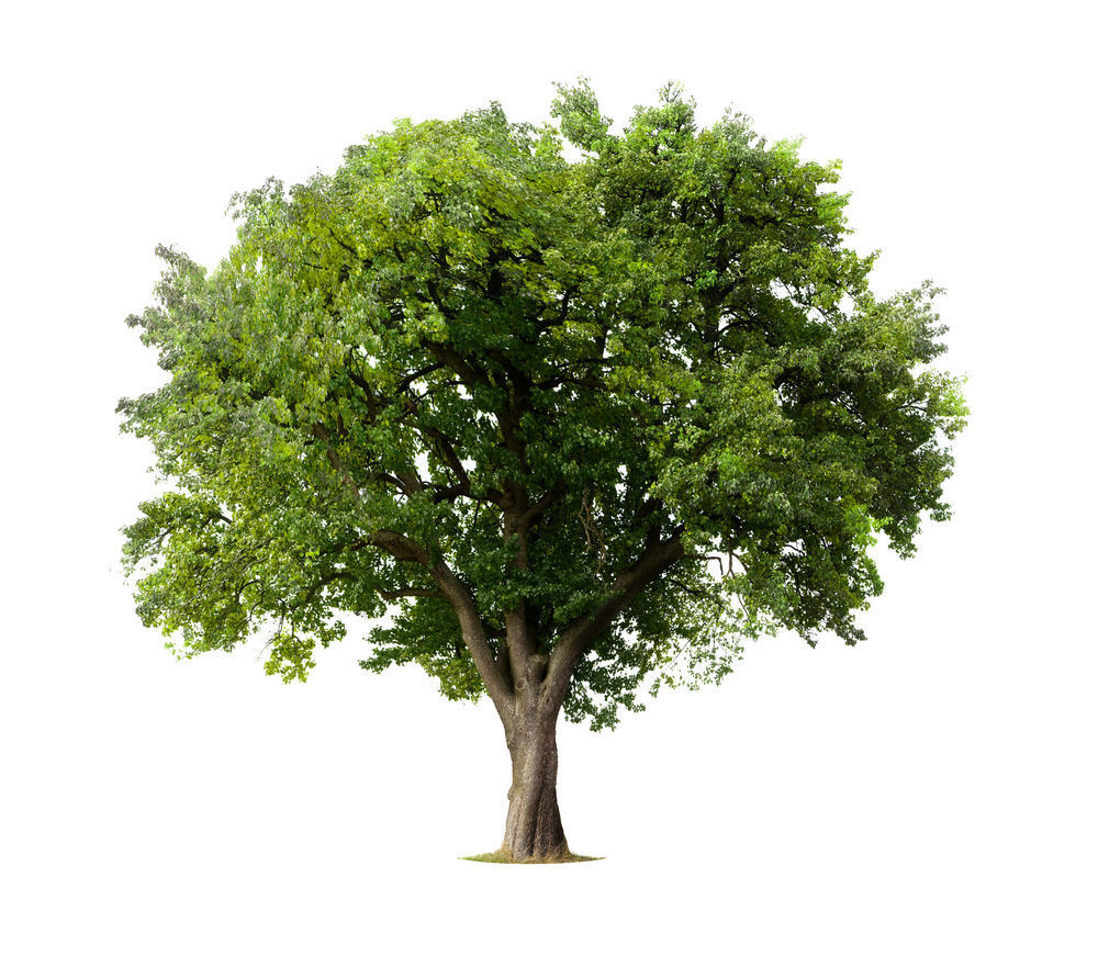 forest tree free