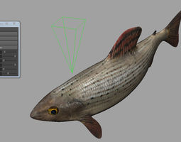 Fish 3D animated