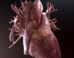 human heart high quality 3d model max obj fbx