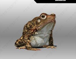 toad animated low-poly 3d model