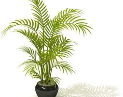 Tall Potted Palm Plant 3D