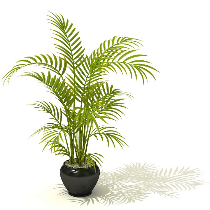 tall potted palm plant 3d model 1