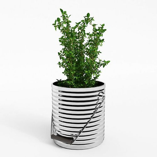 potted thyme plant 3d model obj mtl 1