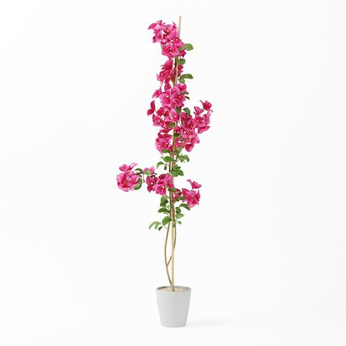 tall pink potted flower 3d model