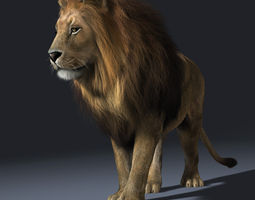 Realistic  lion Rigged  Hair and Furr 3D Model