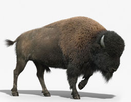 Bison FUR RIGGED 3D Model