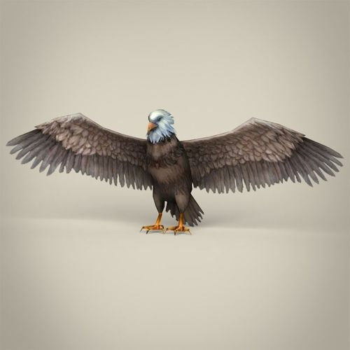 low poly realistic eagle 3d model low-poly max obj mtl 3ds fbx c4d lwo lw lws 1