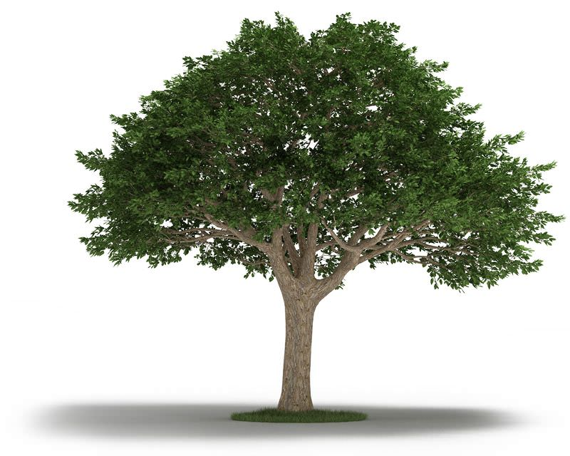 301 Moved Permanently : treeneemtree3dmodel859dfa0e 010e 4033 80fb ec84764e956e from www.cgtrader.com size 800 x 640 jpeg 76kB