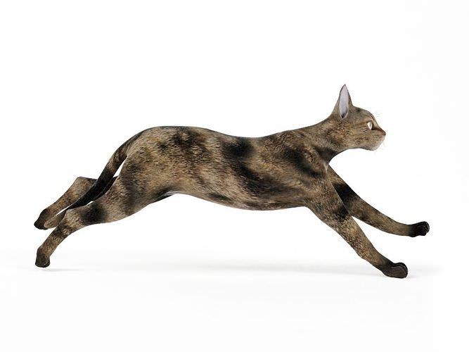 Black And Brown Cat3D model
