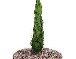 3D model Evergreen Planted Tree