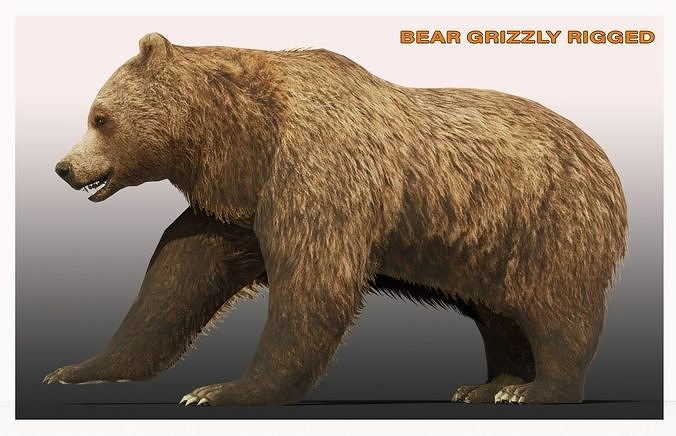 BEAR LOW-POLY RIGGED