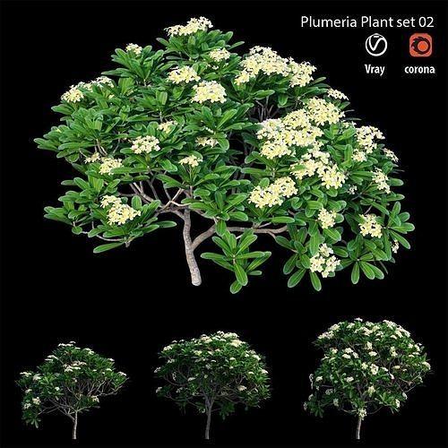 Plumeria Obtusa set 02