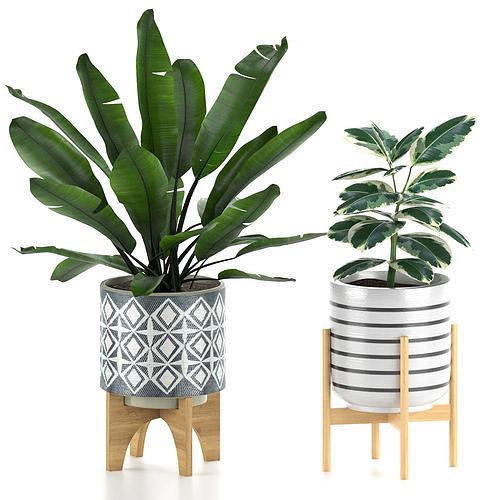 Banana and ficus plants