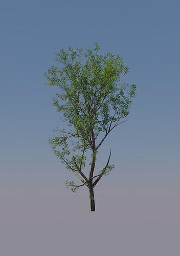 Super Realistic Tree