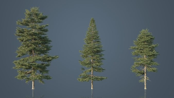 Red Spruce Trees