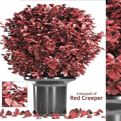 A bouquet of Red Creeper
