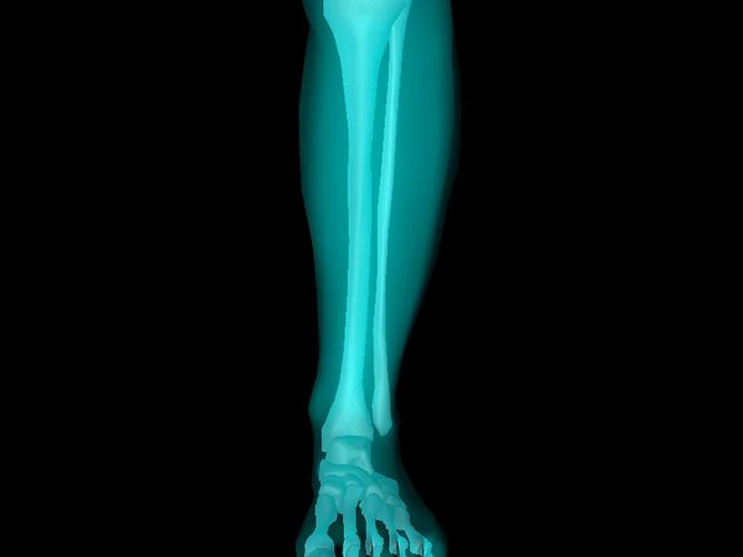x ray ankle joint medically accurate model 3d model animated obj mtl 3ds fbx c4d dxf dae 1