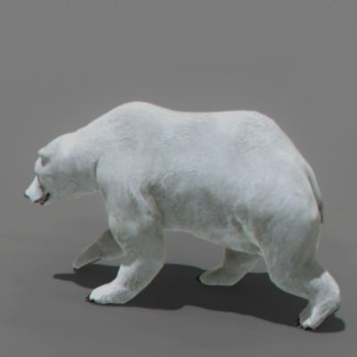 Animated Polar Bear 3D Model .max .obj .3ds .fbx .c4d .lwo .lw .lws