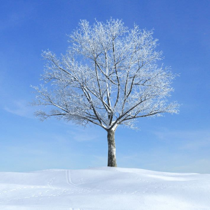 winter and snow trees - photo #17