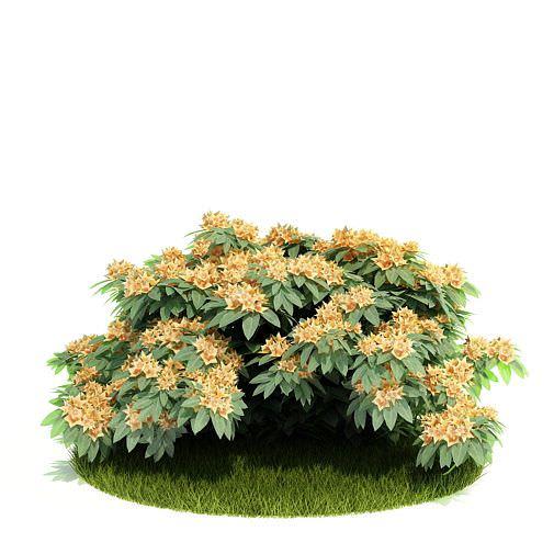 Blooming Leafy Bush