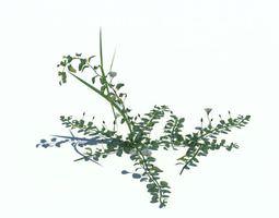 Green Small Plant 3D model