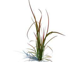 Simple Green Grass 3d 3D model