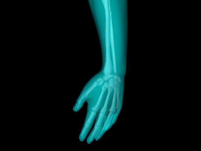 x ray hand medically accurate 3d model 3d model animated obj mtl 3ds fbx c4d dxf stl 1