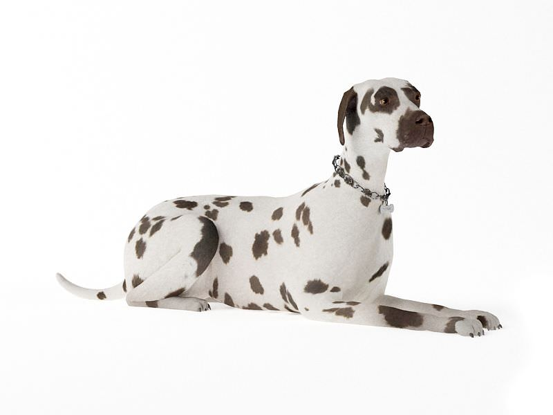 Adult Dog Laying Down 3D Model- CGTrader.com