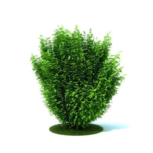 Green Bush3D model