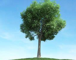 large oak tree 3d